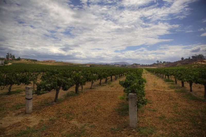 1224 35 самых красивых виноградников мира