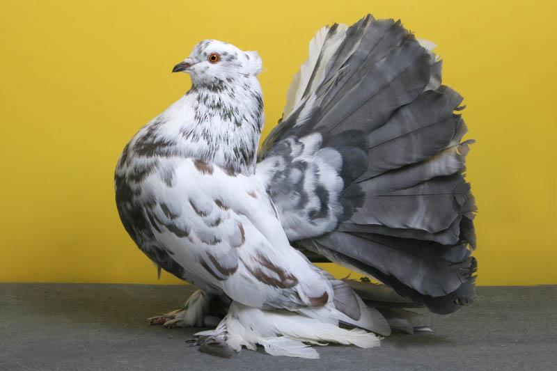 1282 30 голубей чемпионов