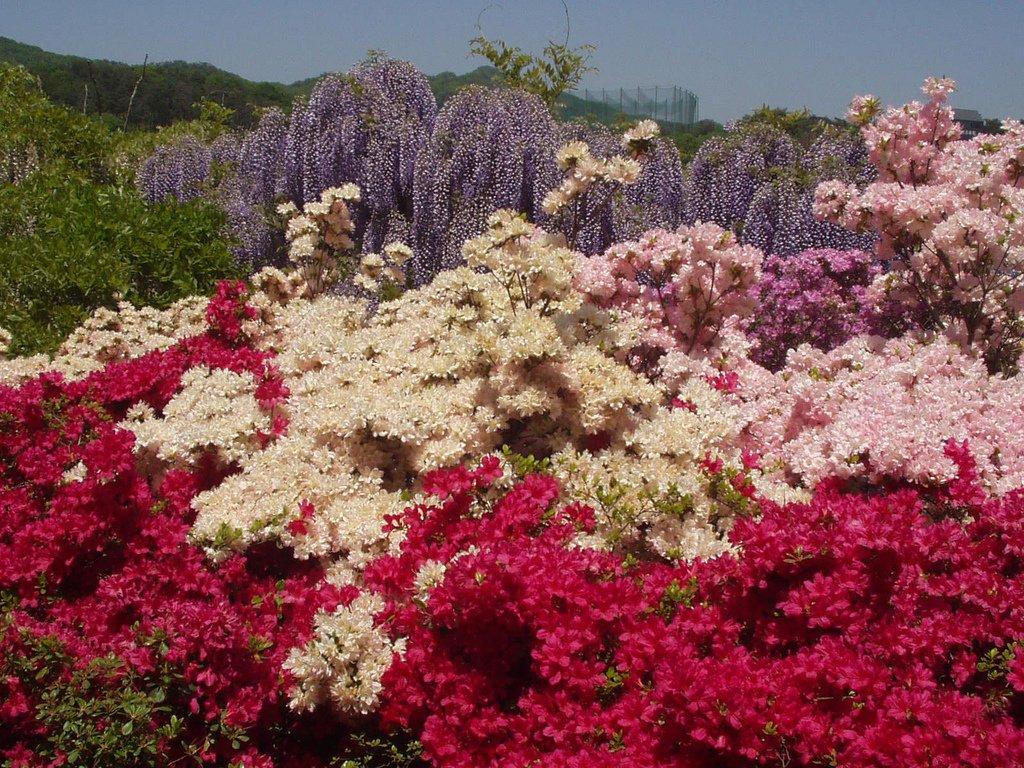 13117 Парк цветов Асикага