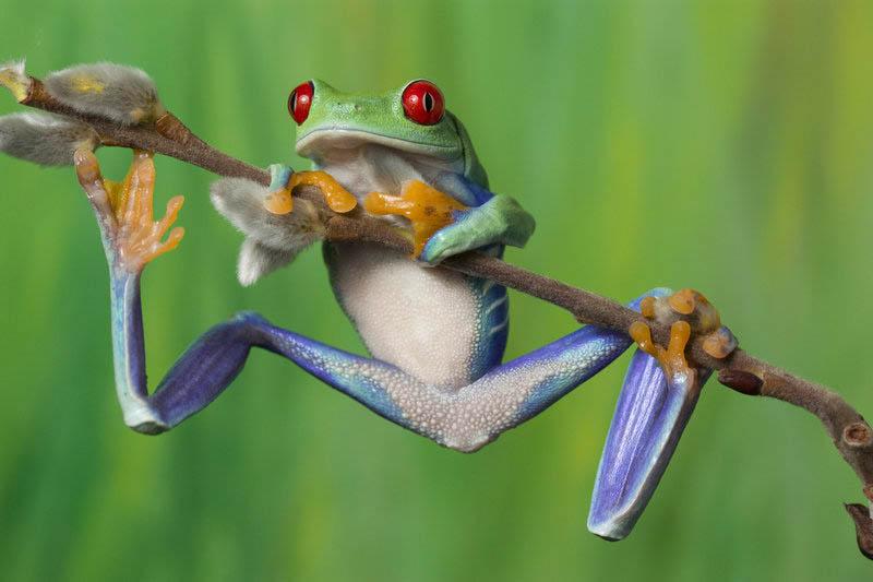 1313 Несколько фактов о лягушках