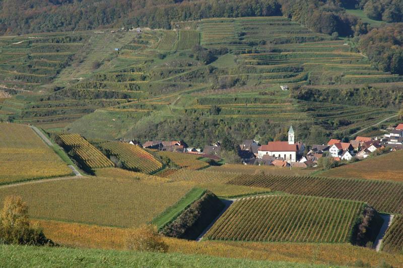 1321 35 самых красивых виноградников мира