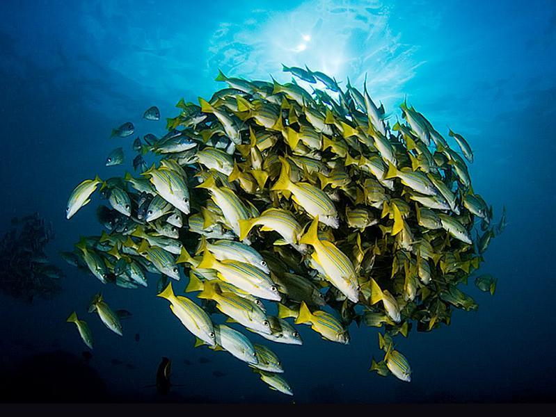 1324 15 удивительных косяков рыбы