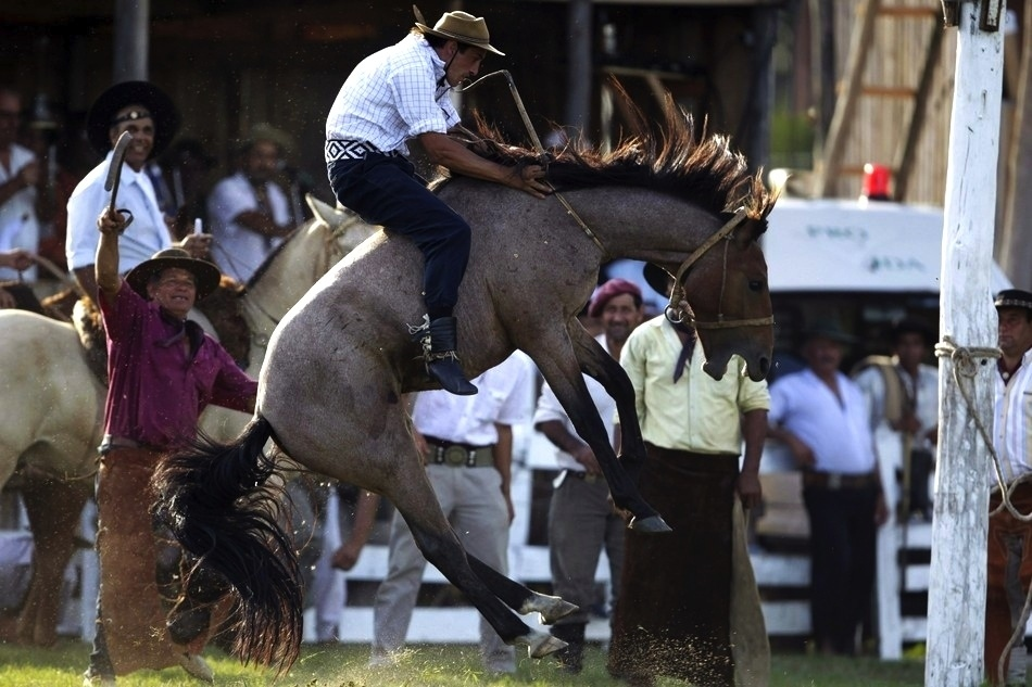 1355 Укрощение необъезженных лошадей: 20 удивительных кадров