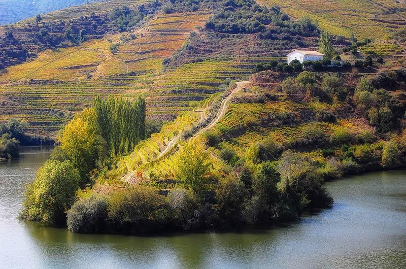 1418 35 самых красивых виноградников мира
