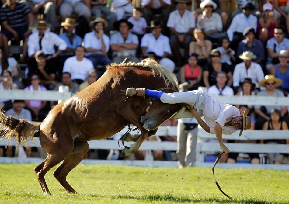 1451 Укрощение необъезженных лошадей: 20 удивительных кадров
