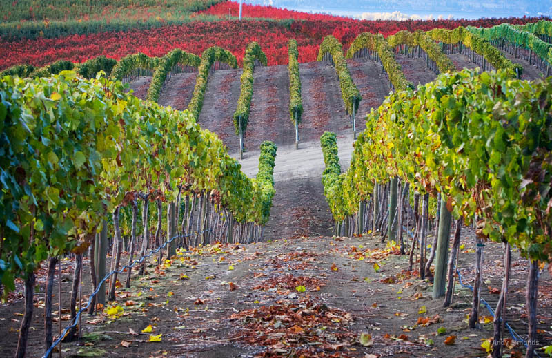 1518 35 самых красивых виноградников мира
