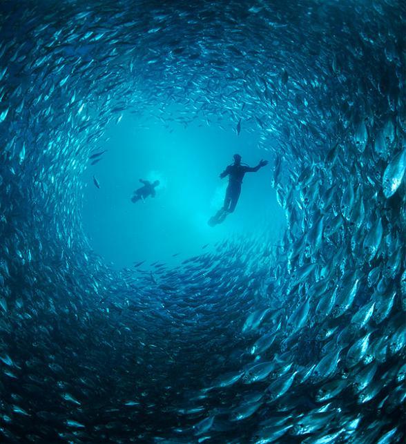 1521 15 удивительных косяков рыбы