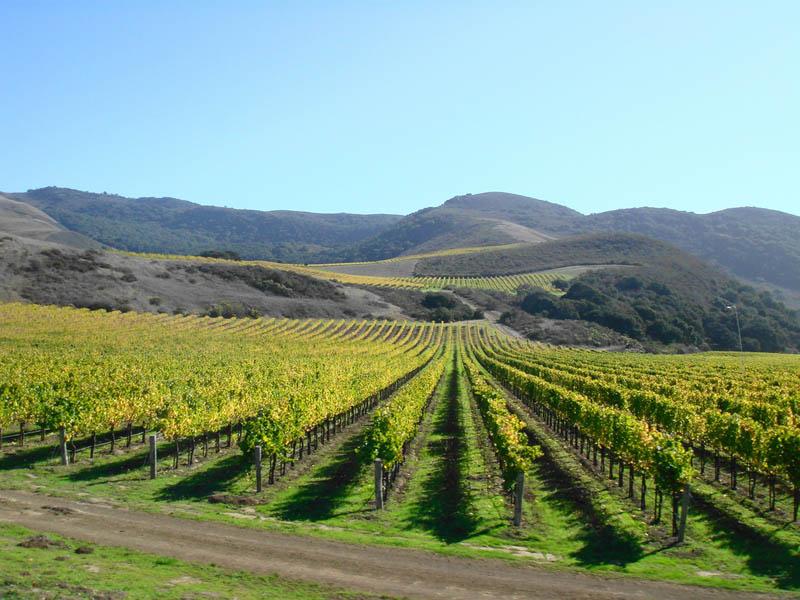 1617 35 самых красивых виноградников мира
