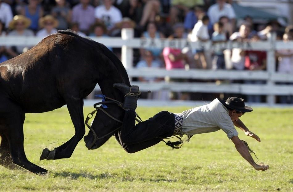 1643 Укрощение необъезженных лошадей: 20 удивительных кадров