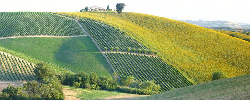 1815 35 самых красивых виноградников мира