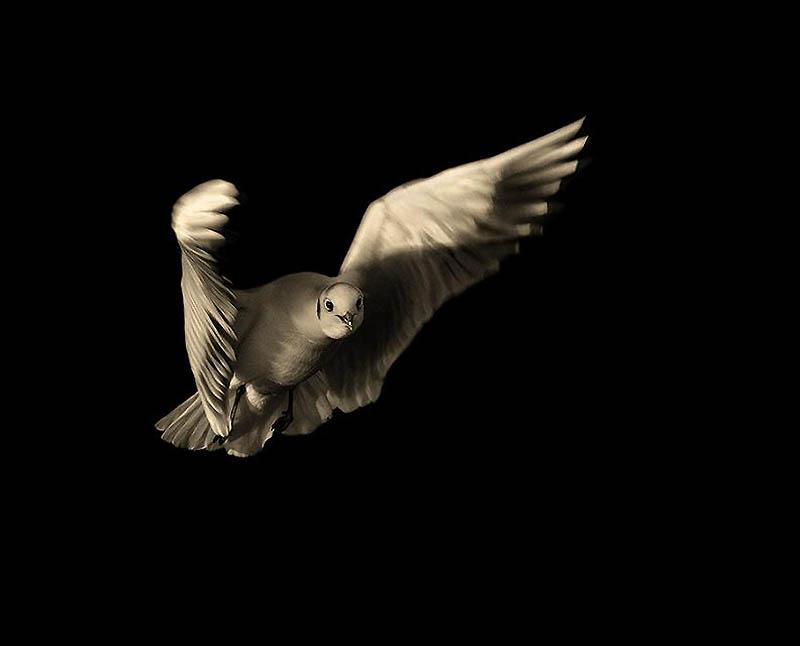 1821 Волшебство полета