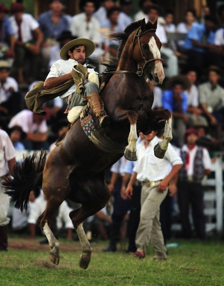 1837 775x989 Укрощение необъезженных лошадей: 20 удивительных кадров