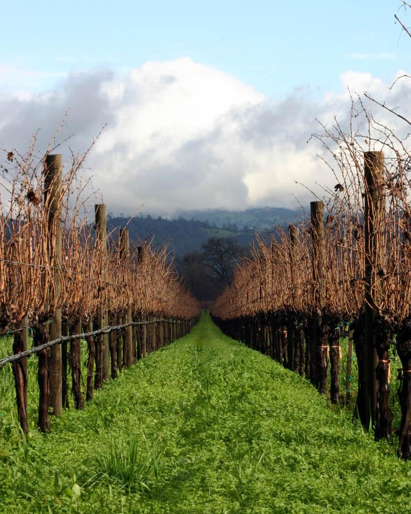 1915 35 самых красивых виноградников мира