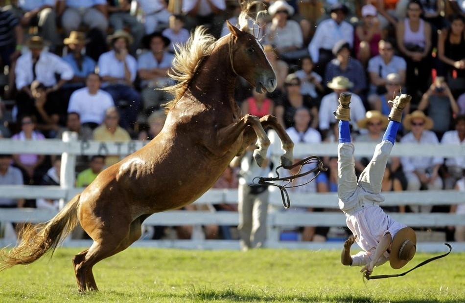 1936 Укрощение необъезженных лошадей: 20 удивительных кадров