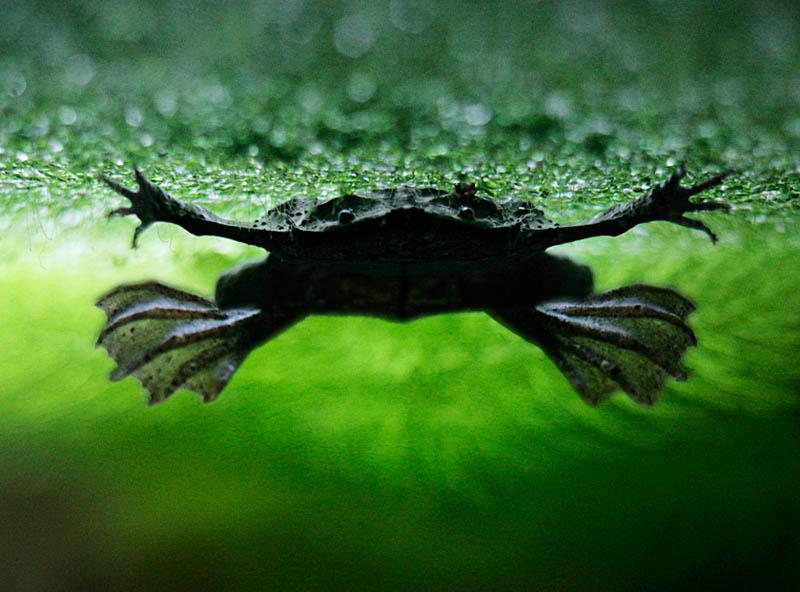 2010 Несколько фактов о лягушках