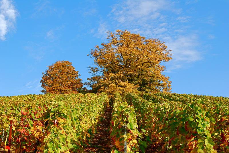 2014 35 самых красивых виноградников мира