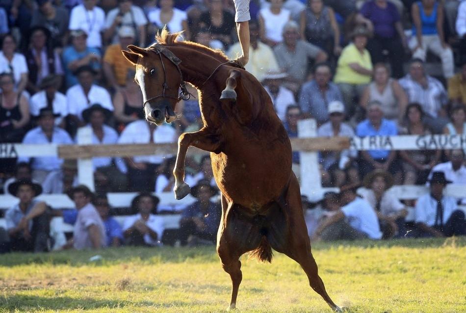 2035 Укрощение необъезженных лошадей: 20 удивительных кадров