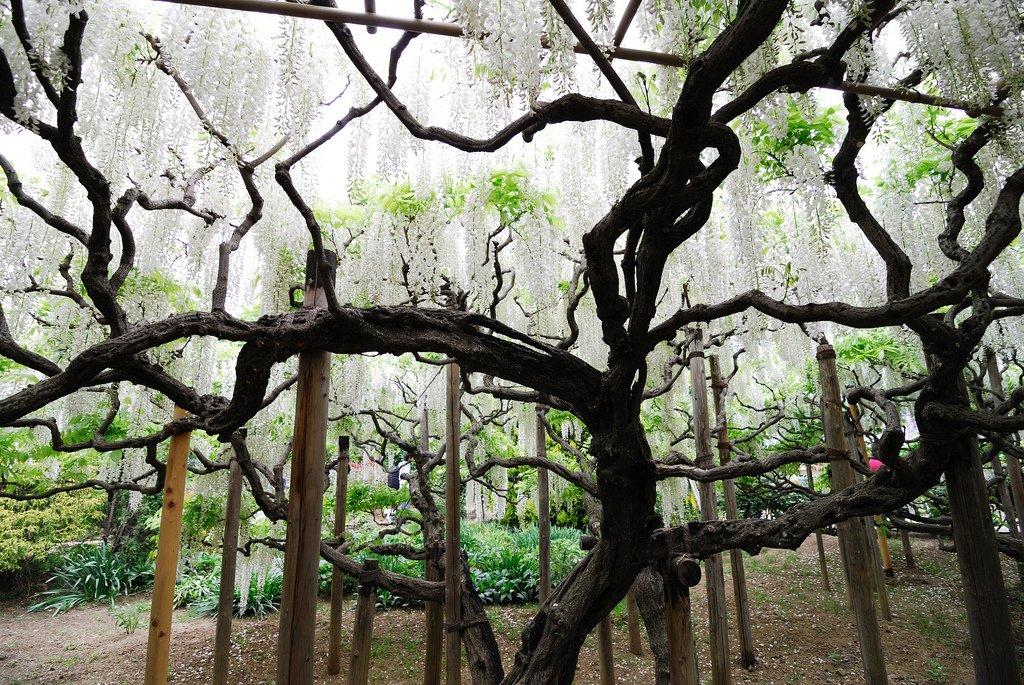 2070 Парк цветов Асикага