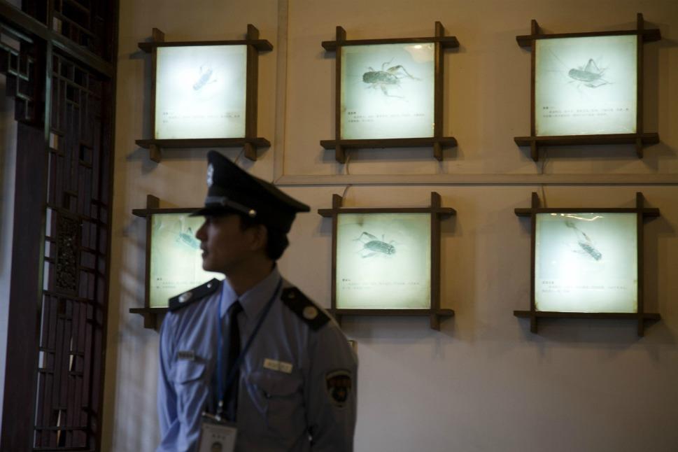 2076 Китайские боевые сверчки