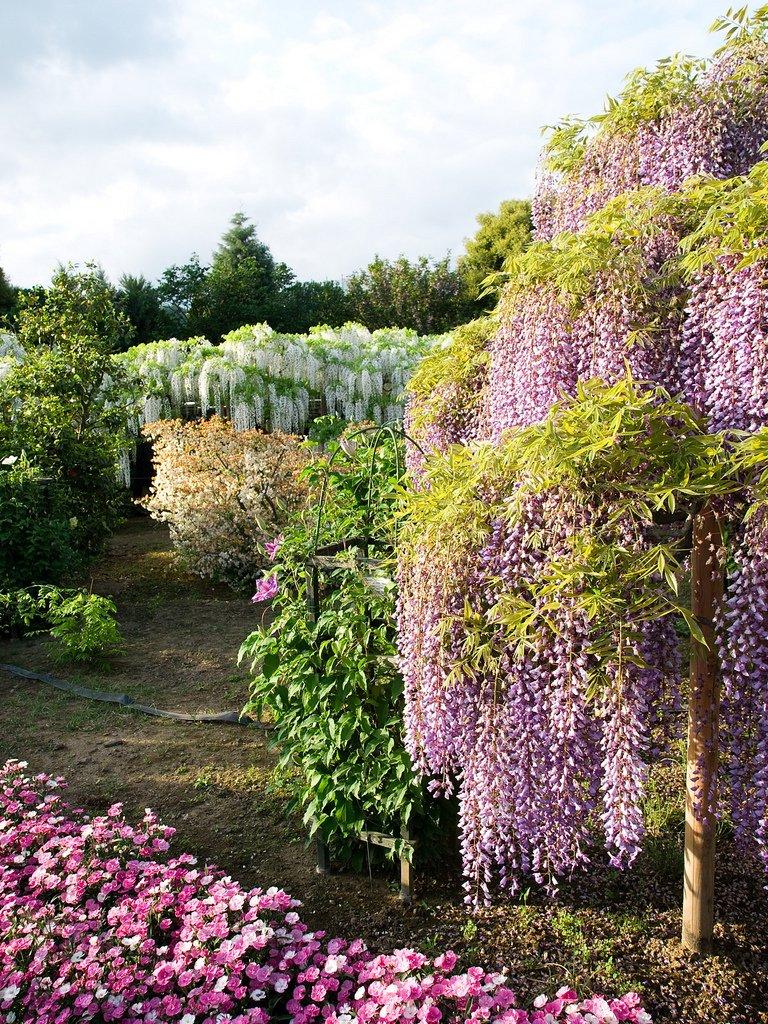 21117 Парк цветов Асикага