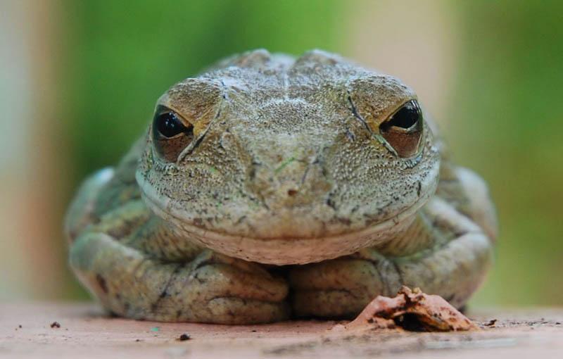 2115 Несколько фактов о лягушках