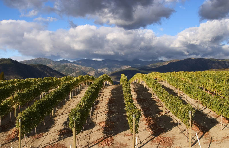 2119 35 самых красивых виноградников мира