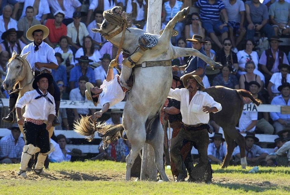 2160 Укрощение необъезженных лошадей: 20 удивительных кадров