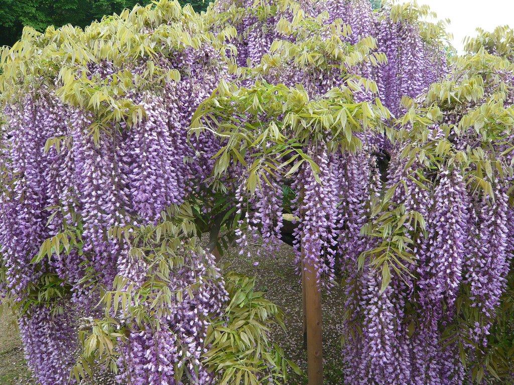 22101 Парк цветов Асикага