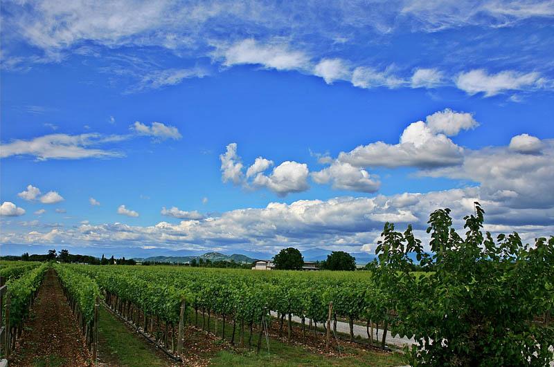 2217 35 самых красивых виноградников мира