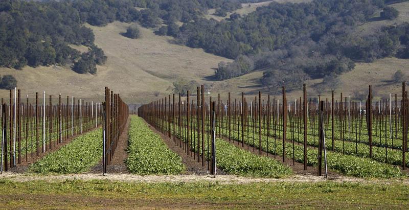 2313 35 самых красивых виноградников мира
