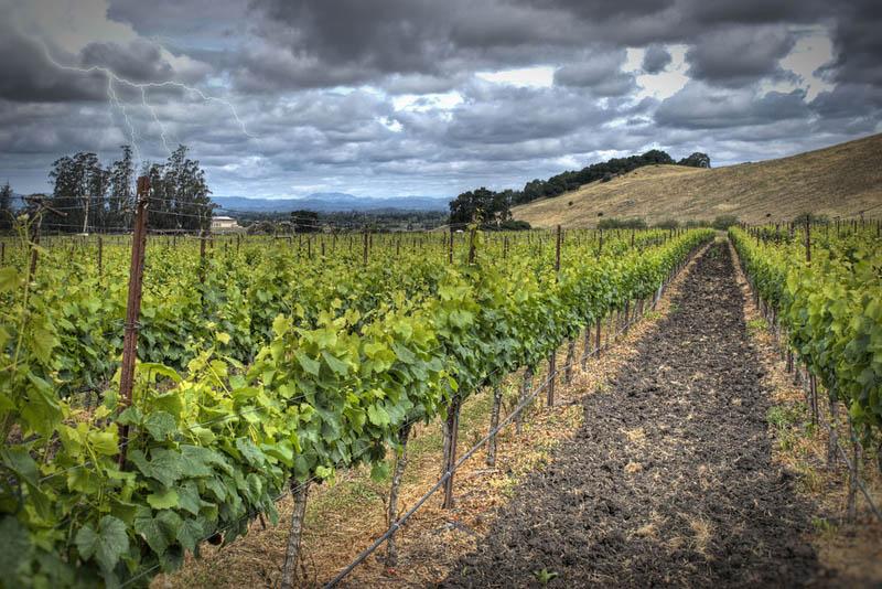 2412 35 самых красивых виноградников мира