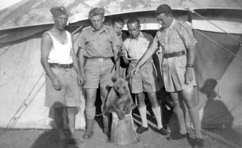 2428 Необычные солдаты Второй мировой: Войтек