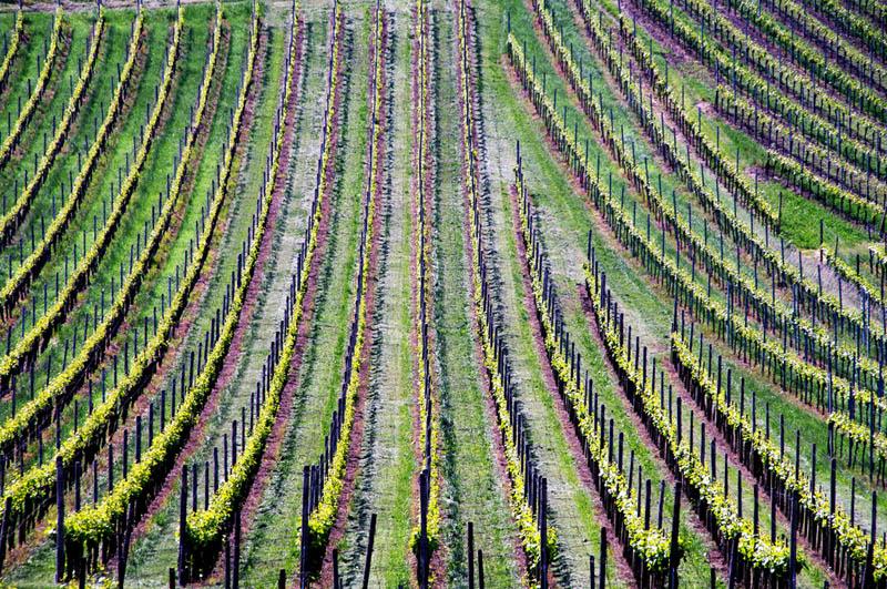 2510 35 самых красивых виноградников мира