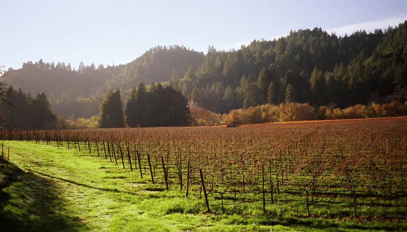 2610 35 самых красивых виноградников мира