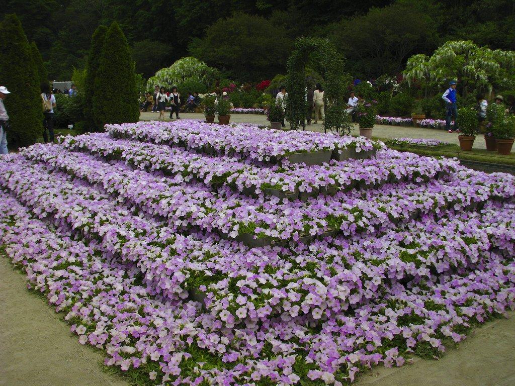 2646 Парк цветов Асикага