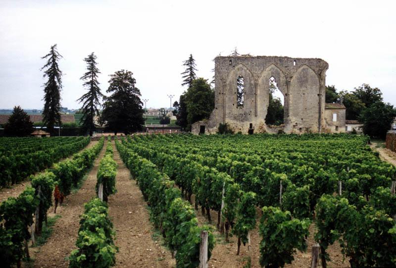 269 35 самых красивых виноградников мира