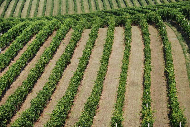 276 35 самых красивых виноградников мира