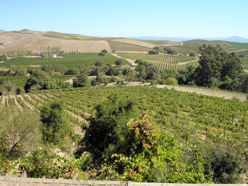 285 35 самых красивых виноградников мира