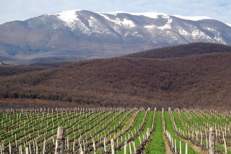 295 35 самых красивых виноградников мира
