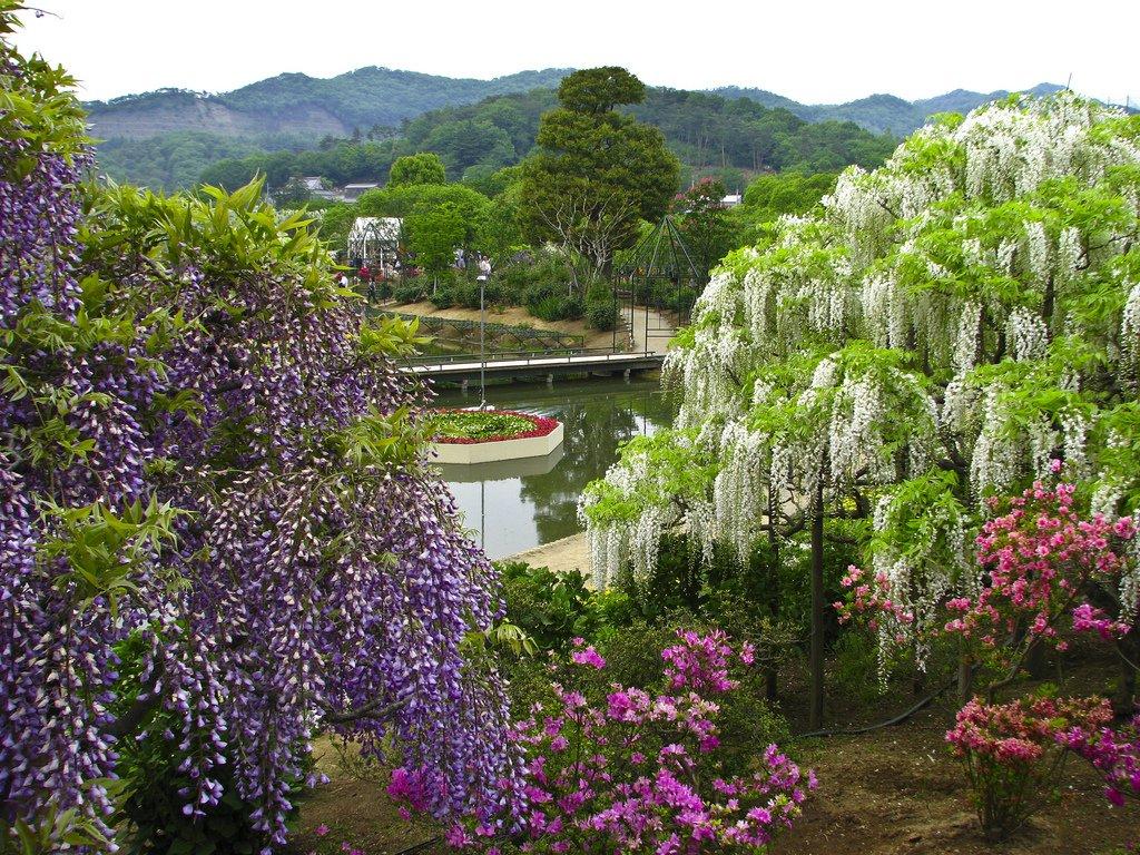 3027 Парк цветов Асикага