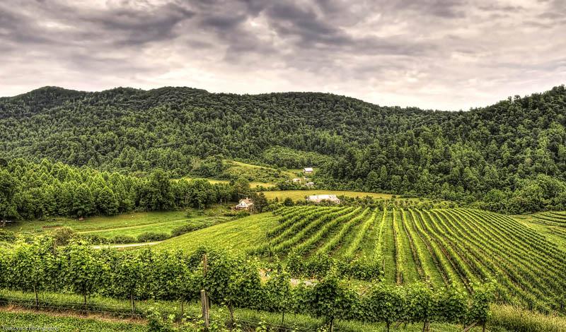 304 35 самых красивых виноградников мира