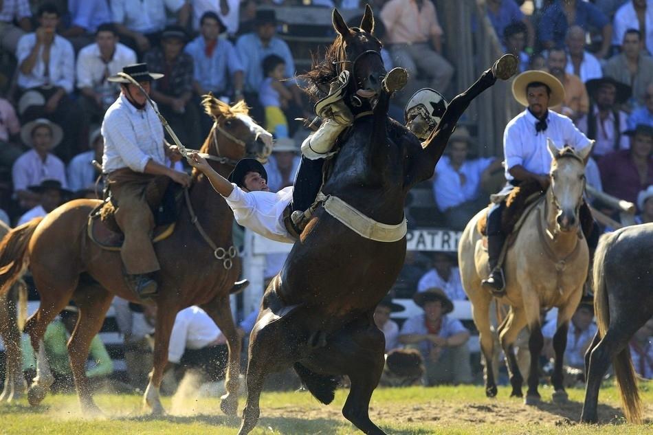 3108 Укрощение необъезженных лошадей: 20 удивительных кадров
