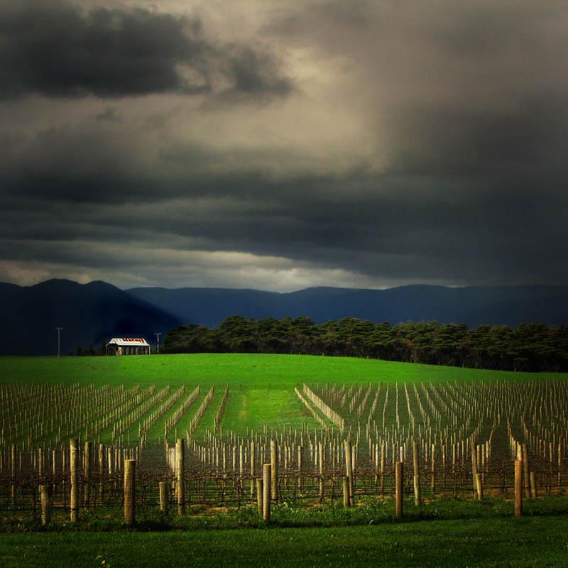 3111 35 самых красивых виноградников мира