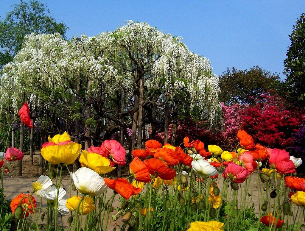 3202 Парк цветов Асикага