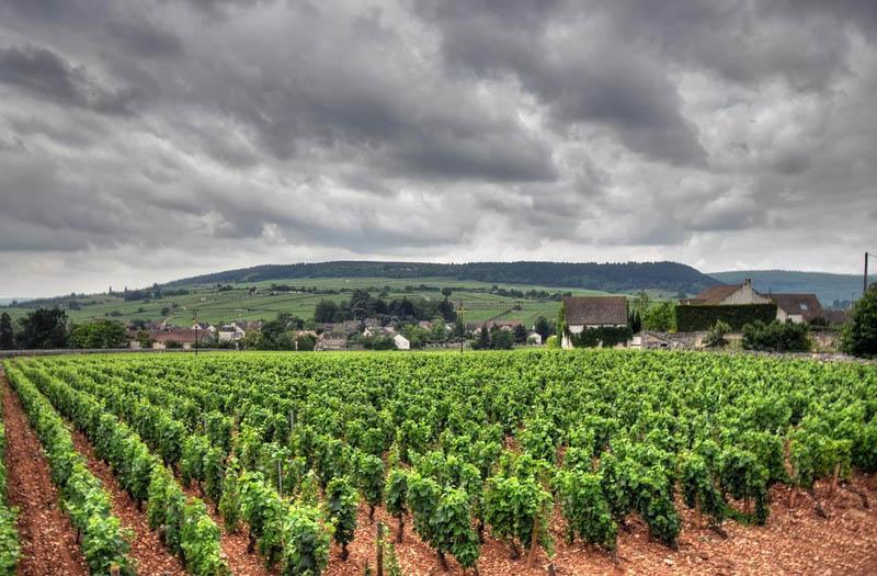 3211 35 самых красивых виноградников мира
