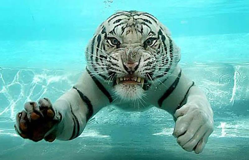 3268 10 животных, которые могут тебя съесть