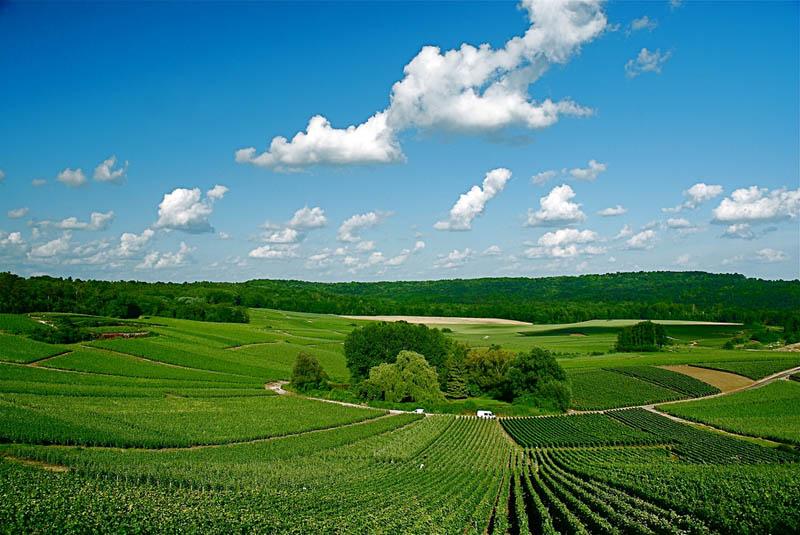 338 35 самых красивых виноградников мира