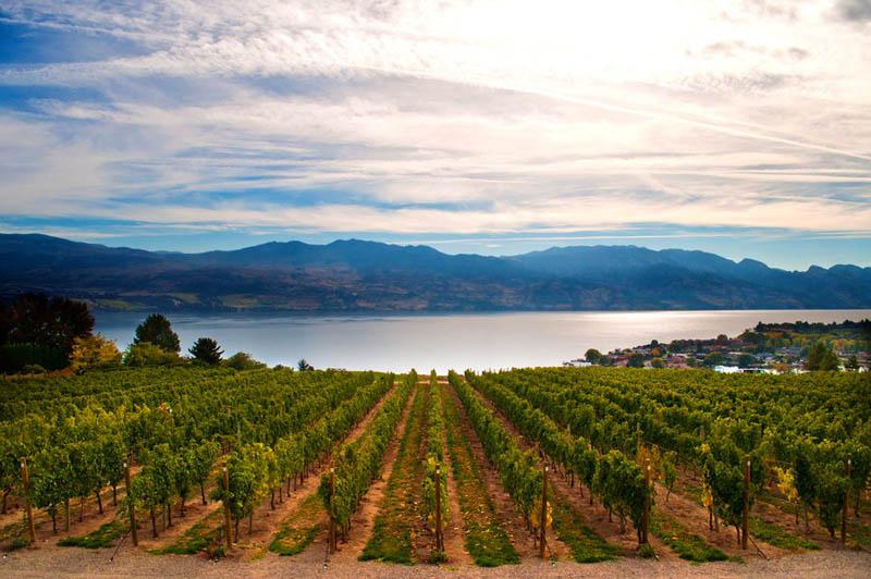 339 35 самых красивых виноградников мира