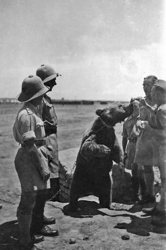 34 1 Необычные солдаты Второй мировой: Войтек