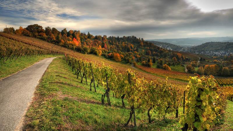 355 35 самых красивых виноградников мира
